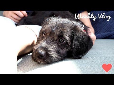 Weekly Vlog   NEW PUPPY, Meadowhall Ladies Night & Meeting Joey Essex