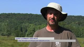 Saint-Lambert-des-Bois : une prairie atypique en observation