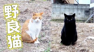 空き地の野良猫ズ - the stray cats in the vacant lot -