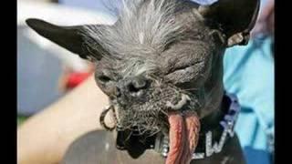 Os cachorros mais feios do Mundo!!!