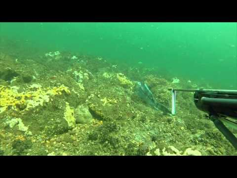 Spearfishing NJ 2014 HD