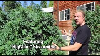 Cannabis Cloning Secrets From Grand Master Growers (Candyland Pt 1)