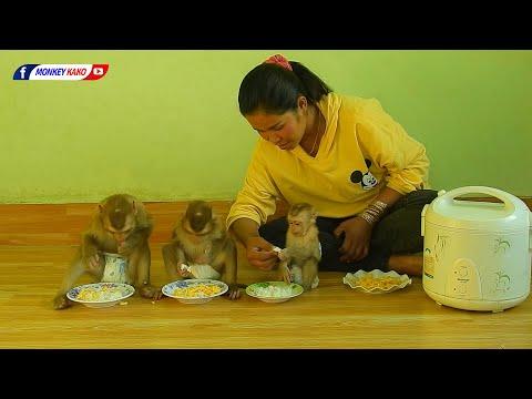 Family Monkey Kako