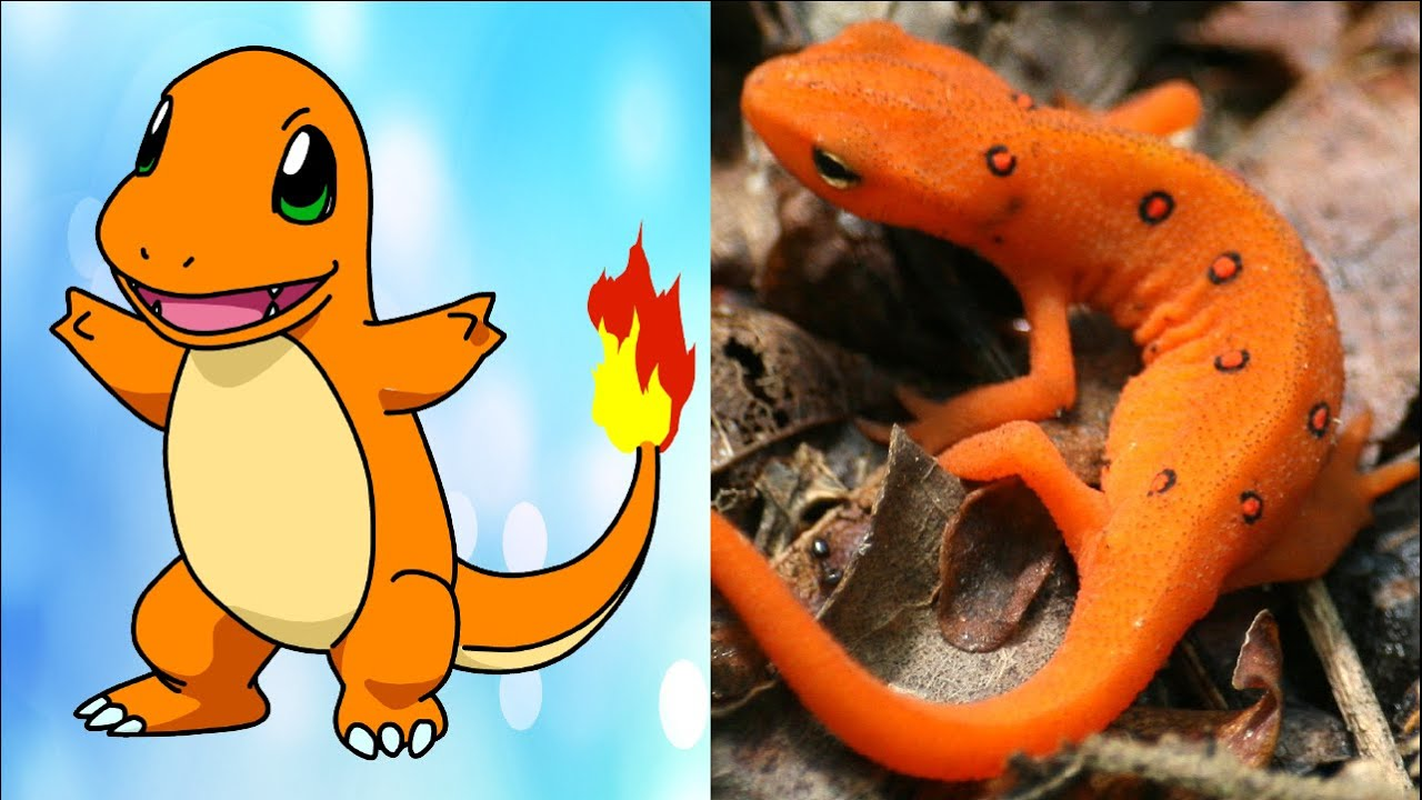 All Pokemon That Exist In Real Life