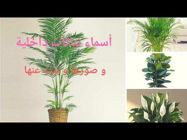 أسماء نباتات داخلية بالصور و نبذه مختصرة عن كل نبتة Youtube