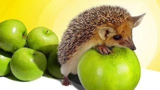 Здоровое питание, Стройность, Успех