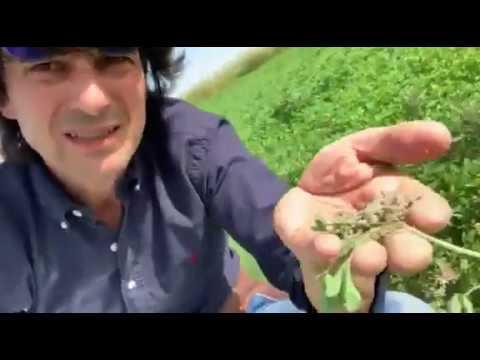 Open Farm: benessere animale = benessere umano