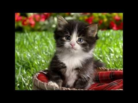 Самые красивые фото котят