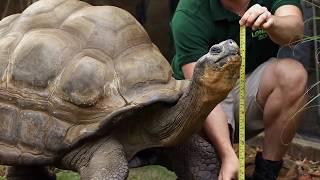 Топ 10: Животные, которые дольше всего могут обходиться без еды