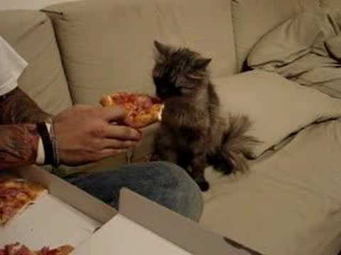 Pizza Eating Cat Youtube