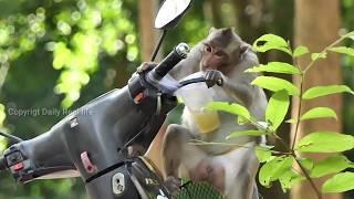 Amazing Cute girl Photo shooting baby monkey Eating lotus with big Group