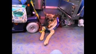Samuel The Service Dog Rides Public Transit