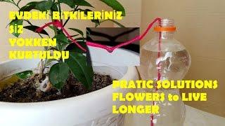 Tatildeyken Ev Bitkileriniz kendini nasıl sular? / Pratik bilgiler
