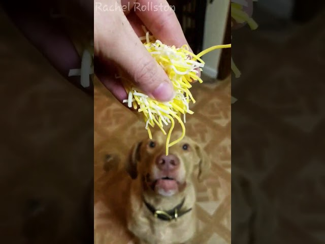 Dog loves cheese