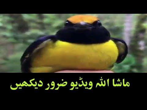 Masha Allah Video Zaroor Dakain