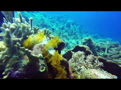 Diving at Couples Negril Resort in Jamaica, Bloody Bay (February 2017). HD 1080p
