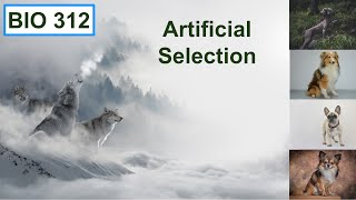 Bio 312 video 11: Lines of evidence for evolution, artificial selection