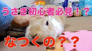 【初心者必見!?】うさぎは飼い主になつくペットなのか? funny rabbit video thumbnail