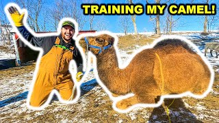 Training My PET CAMEL for the FIRST TIME!!! (Bad Idea)