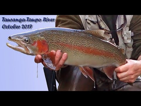 Back On The Tauranga-Taupo River - October 2017