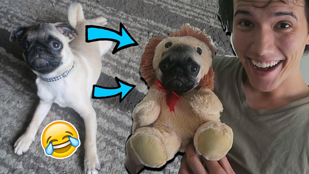 Is Guppy Alex Wassabi S Dog