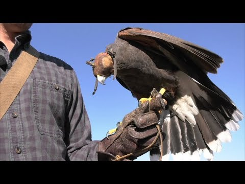 Ranger Nick: Learning About Hawks And Falcons