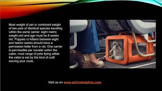 Turkish Airline Pet Travel Policy