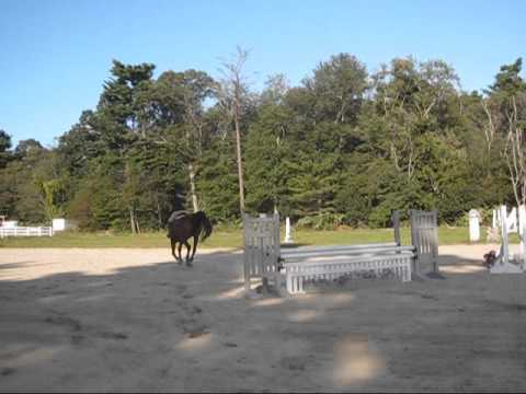 Stonehill College Riding Video