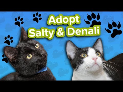 Adopt Denali and Salty SPCA // Adoptable Featurette