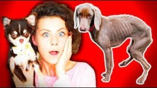 Сколько может прожить собака без еды? Интересные факты о собаках и кошках😵🐶🔮🐱(фан Ани Меджик)