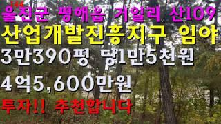 경북 울진군 평해읍 거일리 임야 산업개발진흥지구 투자 …