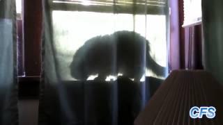 12 кошек съели хозяина видео