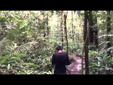 Amazonas jungle trips