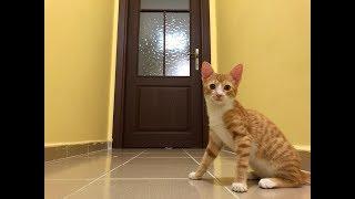Kitten wonders what's behind the mysterious door