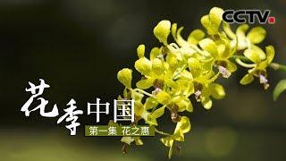 《花季中国》花之惠 | CCTV纪录 - YouTube