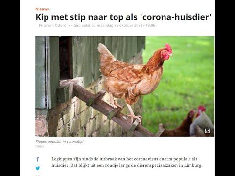 Een kip als corona huisdier?? Waar moet je op letten?