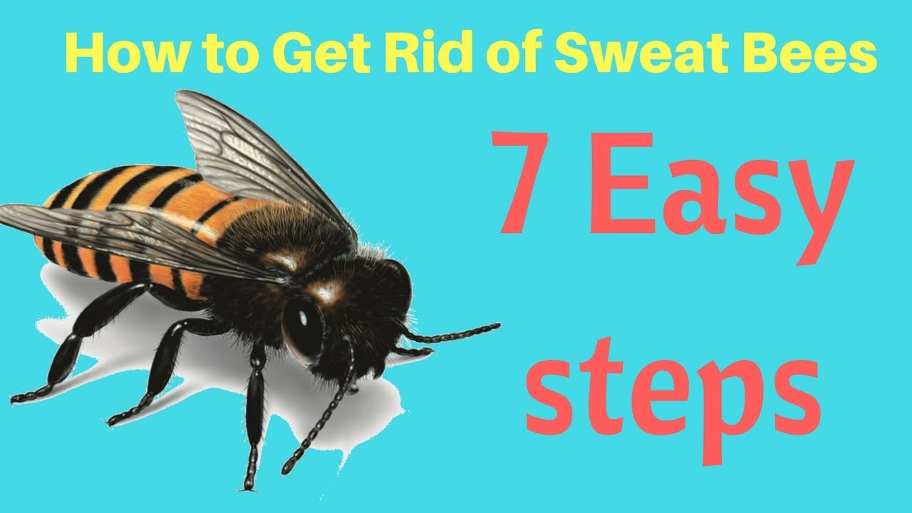how to get rid of sweat bees in yard without professional help