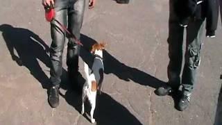 Виставка собак у Сєвєродонецьку 2010 09 26 123914