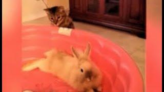 ДЕКОРАТИВНЫЕ КРОЛИКИ видео с  домашними животными – ДРУЖИМ ИЛИ ? – ВЕСЕЛАЯ ПОДБОРКА ПРО ЖИВОТНЫХ