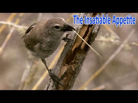 Documentaries 2016  The Life Of Birds  3. The Insatiable Appetite