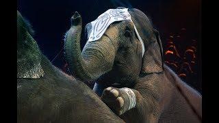 Zwierzęta w cyrku.