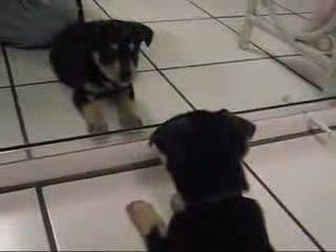 Puppy Vs. Mirror [Zoey]
