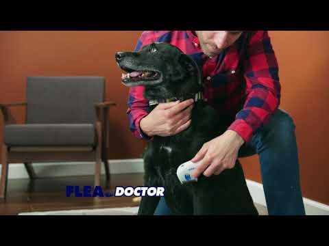 flea-doctor-🐶