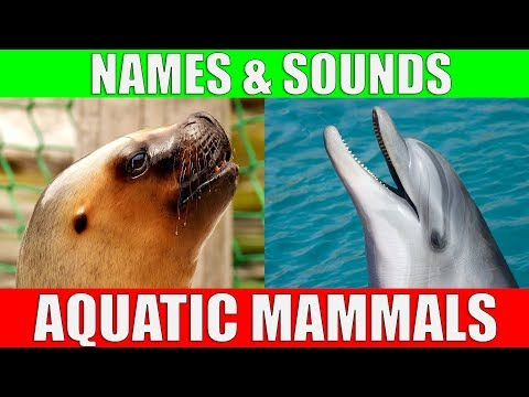 AQUATIC MAMMALS Names and Sounds for Kids to Learn | Learning Aquatic Mammals for Children