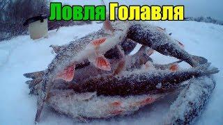 Ловля Голавля Зимой. Голавлиная лунка Рыбалка на мормышку.