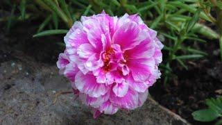 Saiba Porque suas Onze Horas não Dão Flores