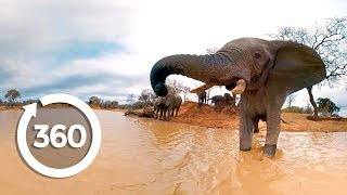 Elephants on the Brink (360 Video)