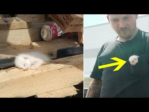 Man Spent 7 Hours Digging In Piles Of Wood To Save Litter Of Kittens In Dumpster
