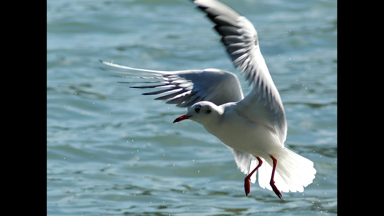 Книга чайка джонатан ливингстон скачать fb2