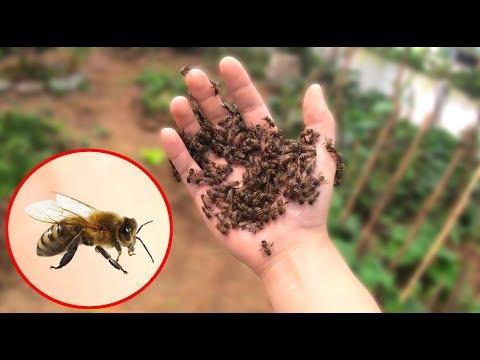 NTN - Thử Thách Bắt Ong Tay Không (Catching bees by hand challenge)